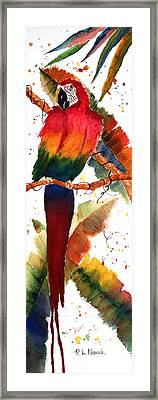 Macaw Feathers Framed Print by Patricia Novack
