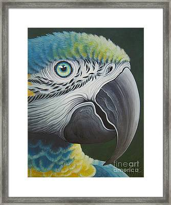 Macaw Head Framed Print