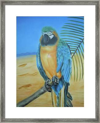 Macaw On A Limb Framed Print