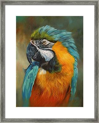 Macaw Parrot Framed Print by David Stribbling