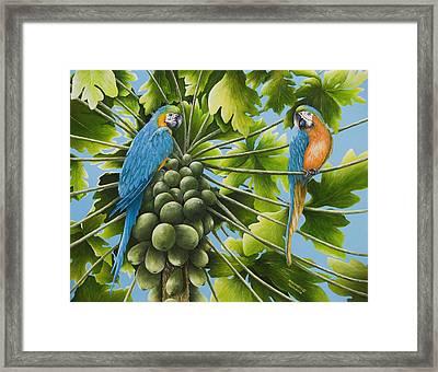 Macaw Parrots In Papaya Tree Framed Print