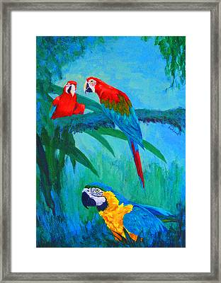 Macaw Trio Framed Print by Margaret Saheed