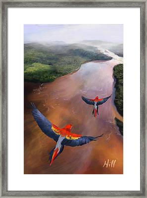 Macaws In Flight Framed Print by Kevin Hill