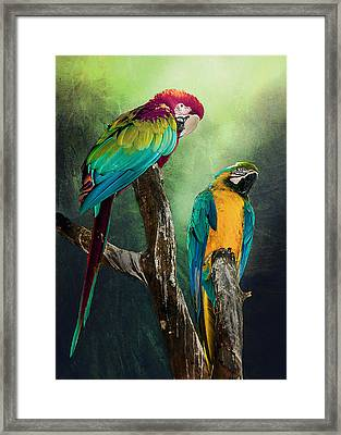 Macaws Siesta Time Framed Print by Brian Tarr