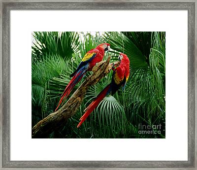 Macaws Framed Print