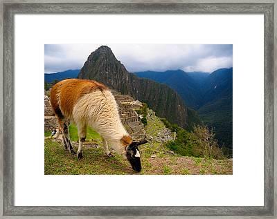 Machu Picchu Peru Framed Print by Max Ratchkauskas