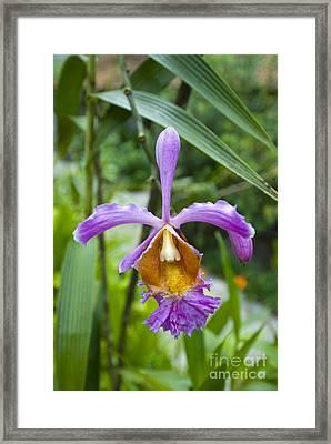 Machu Picchu Terrestrial Orchid Framed Print