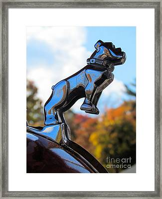 Mack Bulldog Framed Print