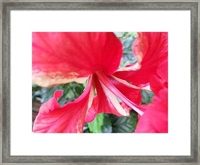 Macro Beauty Framed Print by Fortunate Findings Shirley Dickerson