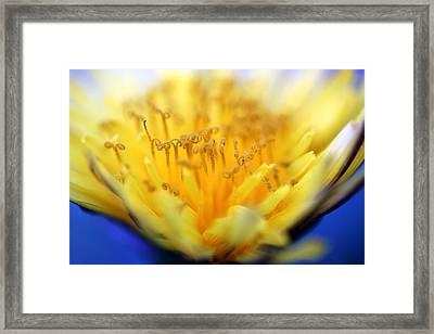 Macro Blur 2 Framed Print by Mark Ashkenazi