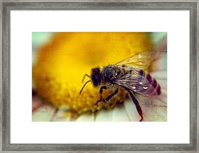 Macro Buzz Framed Print by Rhonda Barrett