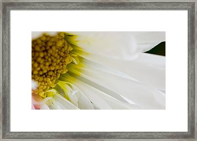 Macro Daisy Framed Print by John Holloway