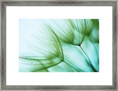 Macro Dandelion Seed Framed Print by Jasmina007