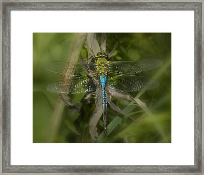 Macro Dragonfly Framed Print