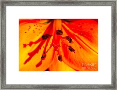Macro Flower Framed Print by Nur Roy