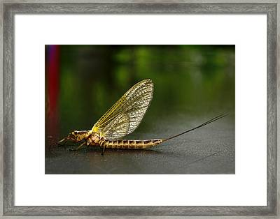 Macro Hex Framed Print by Thomas Young