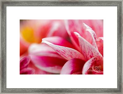 Framed Print featuring the photograph Macro Image Of A Pink Flower by Nick  Biemans