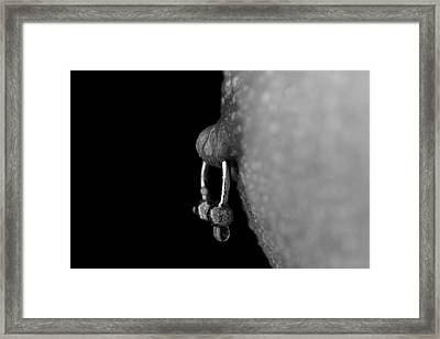 Macro Framed Print by Mark Ashkenazi