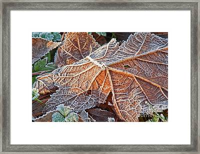Macro Nature Image Of Fallen Leaf With Frost Framed Print