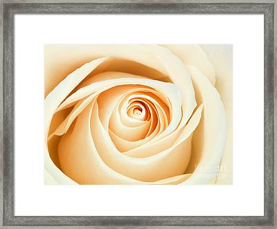 Macro Of A Peach And Pink Rose Framed Print