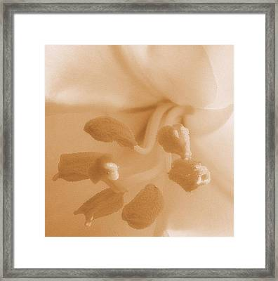Macro Of White Flower Detail High Key Sepia Tone Framed Print