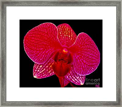 Macro Orchid On Black Framed Print by Marsha Heiken