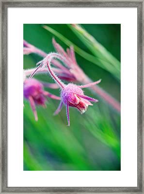 Macro Photo Of Prairie Flowers Framed Print