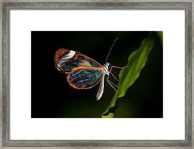 Framed Print featuring the photograph Macro Photograph Of A Glasswinged Butterfly by Zoe Ferrie
