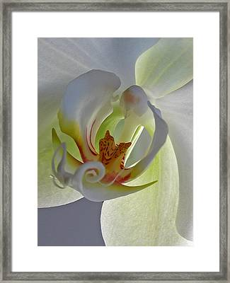 Macro Photograph Of An Orchid  Framed Print by Juergen Roth