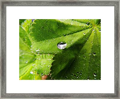 Macro Raindrop On Leaf Framed Print by Karen Horn