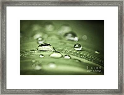 Macro Raindrops On Green Leaf Framed Print by Elena Elisseeva