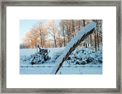 Macro Framed Print by Robert Hellstrom