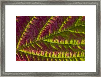 Macro View Of Salmonberry Leaf Changing Framed Print