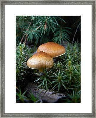 Macrofungi Bc Wild Mushroom Framed Print