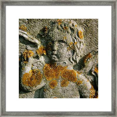Macrophotograph Of A Lichen Framed Print by Dr. Jeremy Burgess