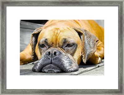 Macy's Lazy Days Framed Print by Jeff Mize