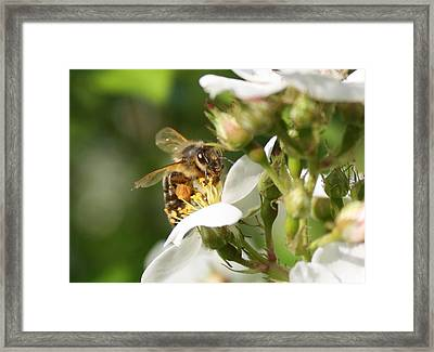 Mad Honeybee Framed Print