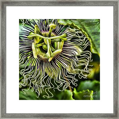 Mad Passion Framed Print by Peggy Hughes
