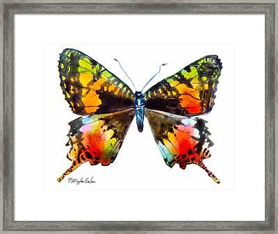 Madagascan Sunset Moth Framed Print by Patricia Allingham Carlson
