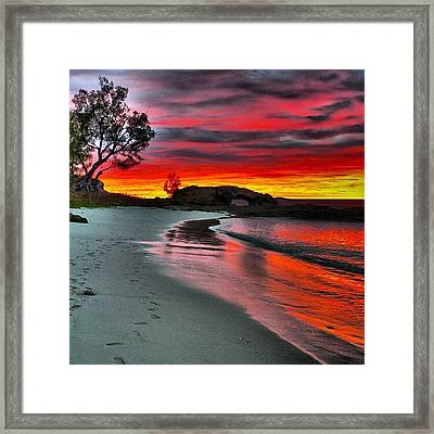 Madagascar3 Framed Print