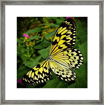 Madam Butterfly Framed Print