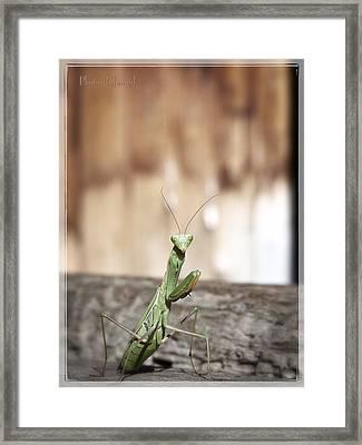 Madame Mantis Framed Print
