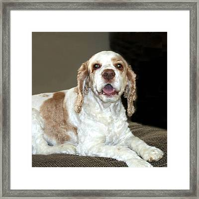 Framed Print featuring the photograph Maddie by Ellen O'Reilly
