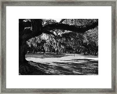 Made In The Shade  2 Framed Print by Mel Steinhauer