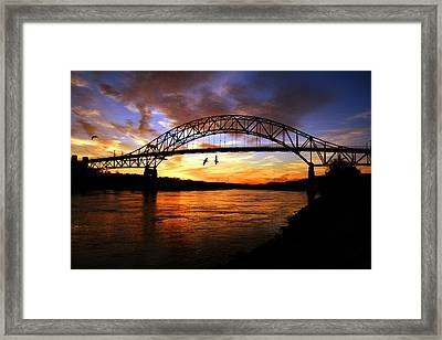 Made You Look Framed Print by Matthew Grice