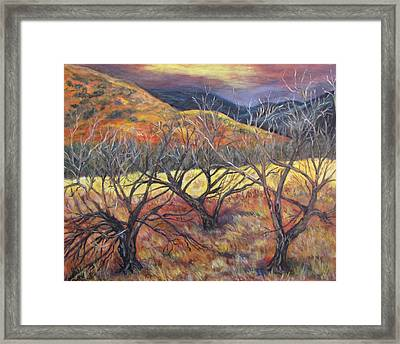 Madera Canyon 2 Framed Print by Caroline Owen-Doar