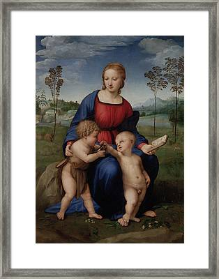 Madonna Of The Goldfinch Framed Print by Raphael
