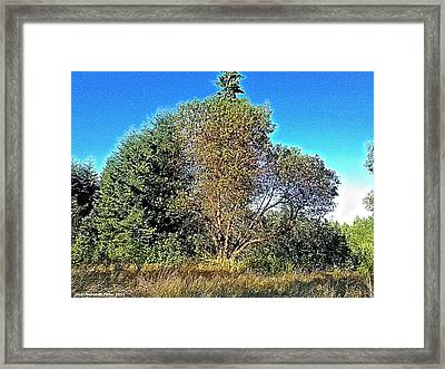 Madrona Framed Print by Tobeimean Peter