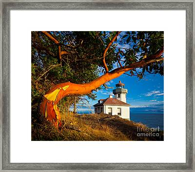 Madrone And Lighthouse Framed Print
