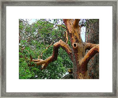 Framed Print featuring the photograph Madrone Character by Wendy McKennon
